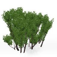 Bush 01