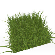 Grass Wild Uncut
