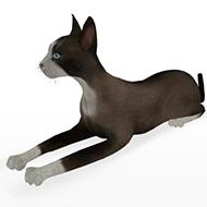 Cat 068