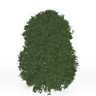 Hedge S5