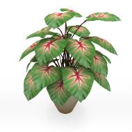 Plant 057