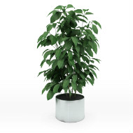 Potted small tree