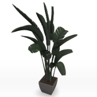 Potted Plant Banana Leaf