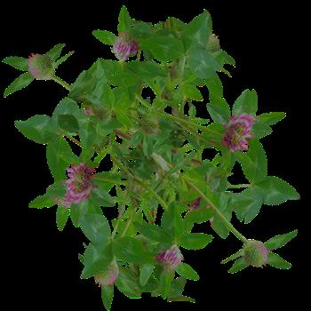 Flowers bush 2