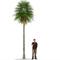Generic Palm 1