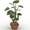 Potted Plant 022
