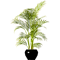 Potted plant 13