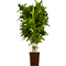 Potted plant 28