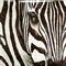 Painting Zebra